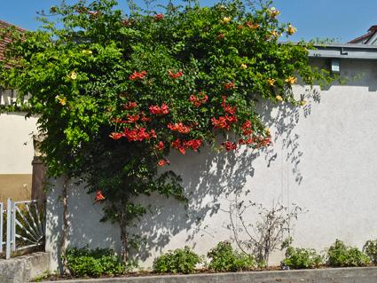 Bevorzugt Fassadenbegrünung – Mut zu grünen Wänden! RG38