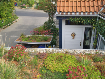 lebendig und kologisch wertvoll die dachbegr nung. Black Bedroom Furniture Sets. Home Design Ideas